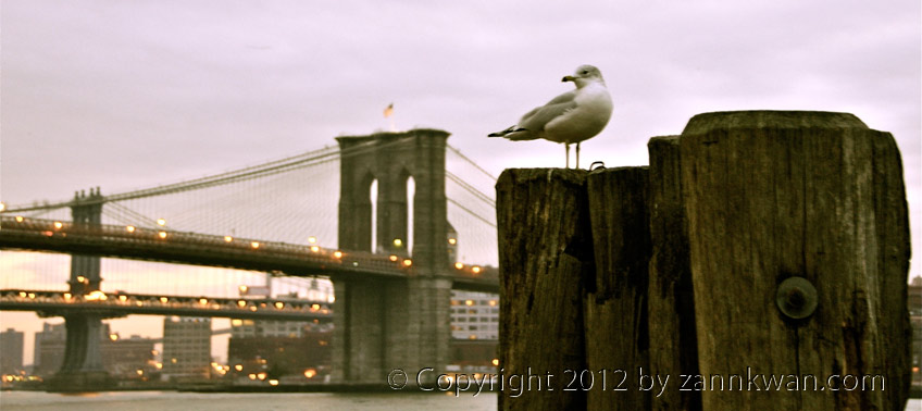 Bird, Bridge, Brooklyn